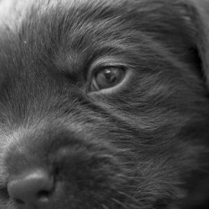 puppys_10