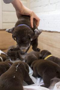 puppys_22